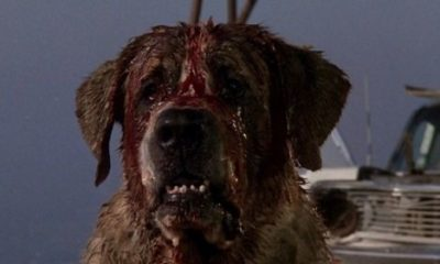 Film Stephenking Cujo