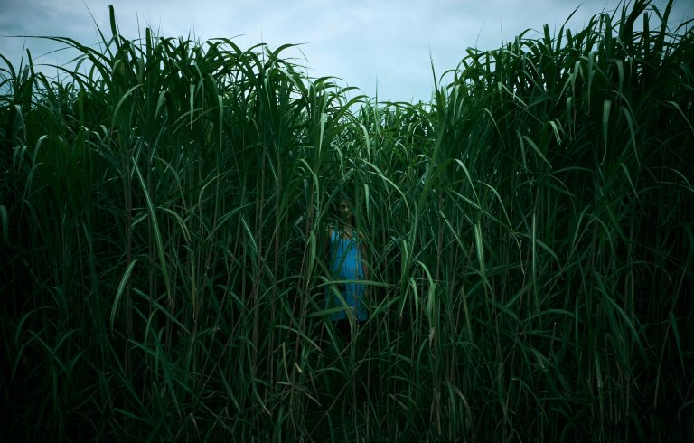 In The Tall Grass Stephen King Joe Hill Netflix