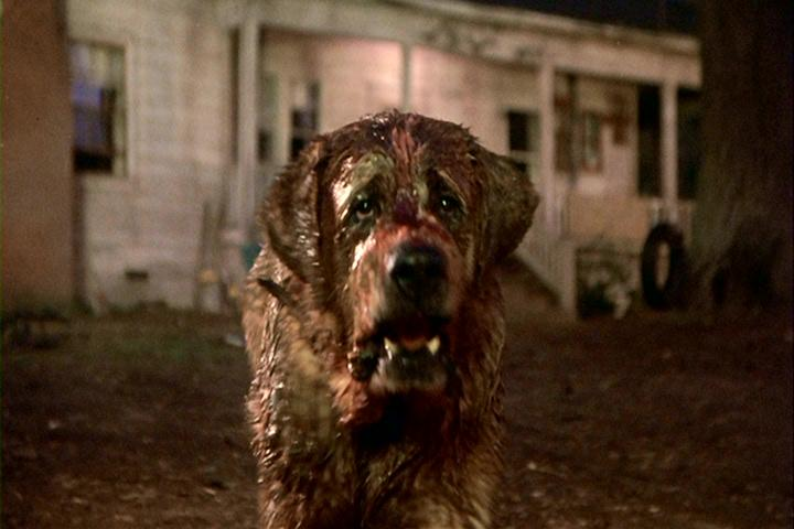 Cujo Film Stephenking